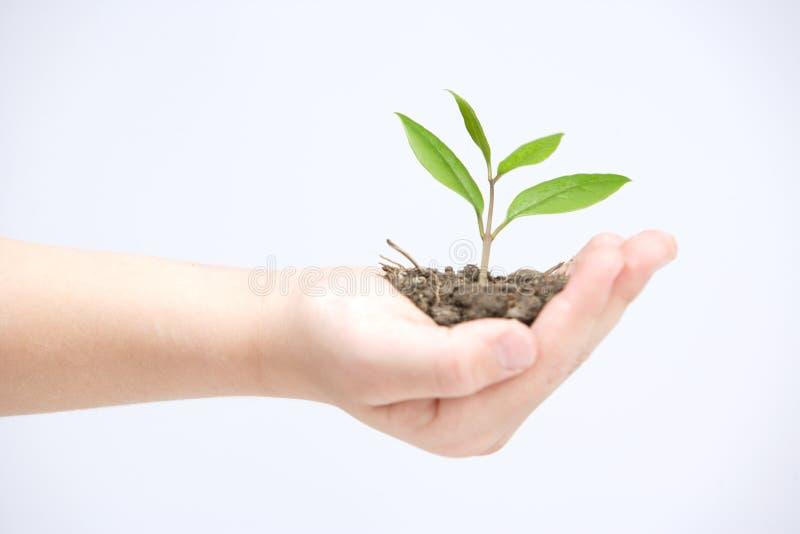 Prendendo a planta pequena imagens de stock royalty free