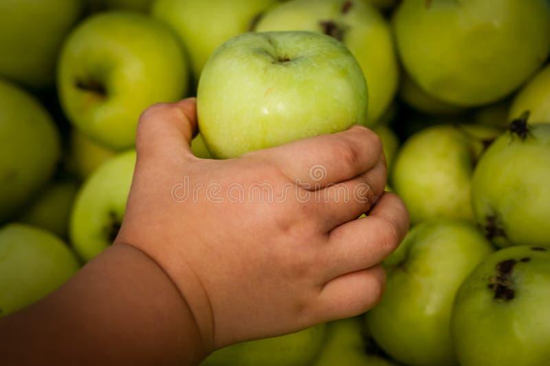 Prendere una mela immagini stock