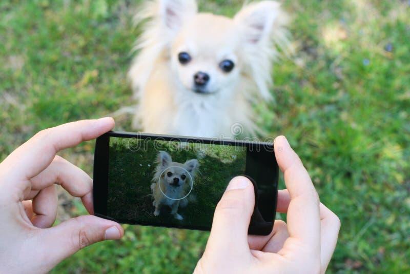 Prendre la photo du chien photographie stock