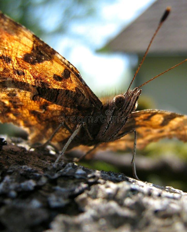 Prendre un bain de soleil de papillon image libre de droits