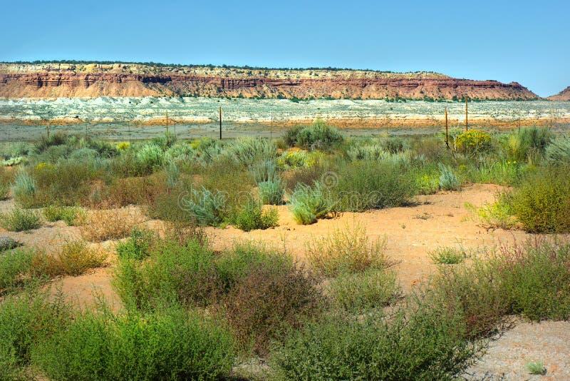 Prenotazione indiana degli amaranti del paesaggio del deserto fotografia stock