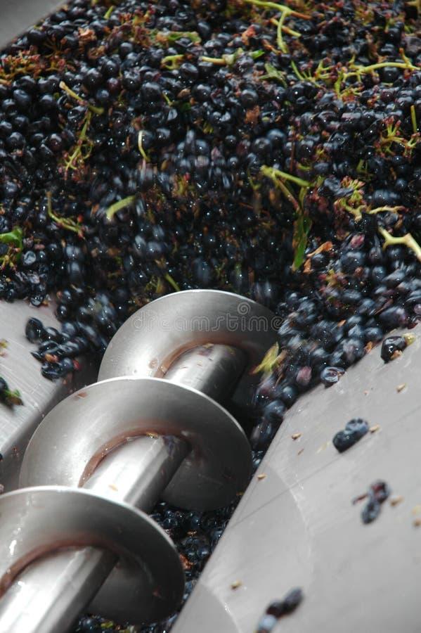 Prensa de la uva de la cosecha de la uva para la producción de vino imágenes de archivo libres de regalías