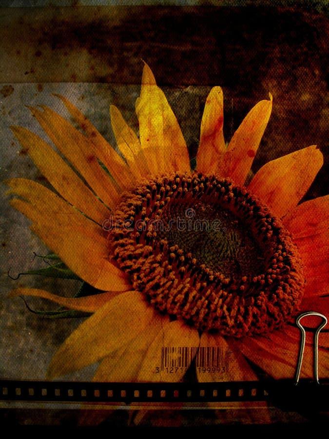 Prentbriefkaar 1 van de zonnebloem royalty-vrije stock afbeelding