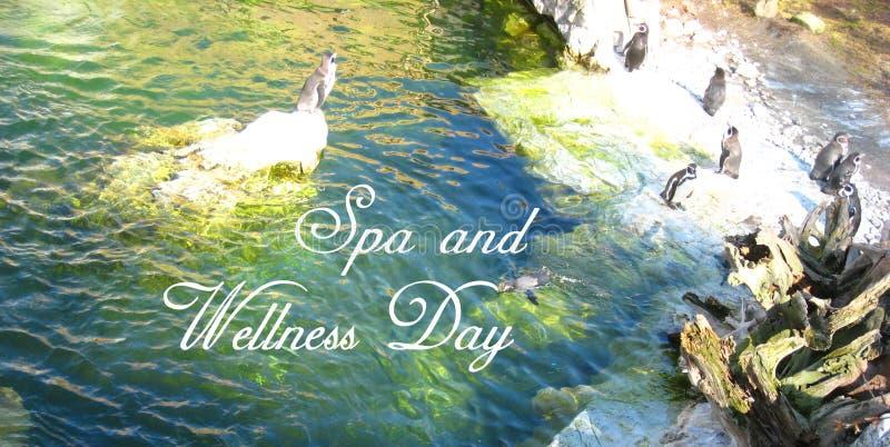 Prentbriefkaar met een ontspannen atmosfeer met de pinguïnen in de dierentuin in Wenen royalty-vrije stock afbeelding