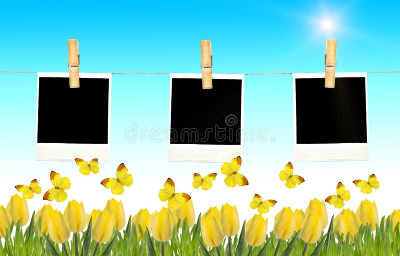 Prentbriefkaar met vers tulpen en gras Lege fotokaders op klonter stock afbeelding