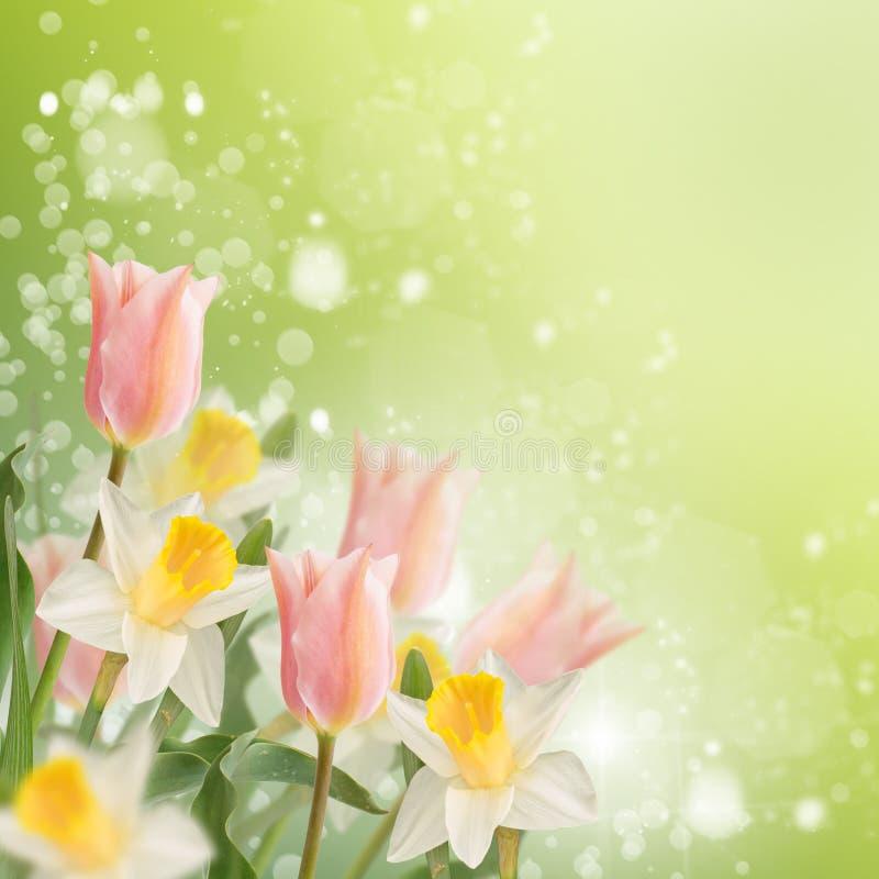 Prentbriefkaar met verse bloemengele narcissen en tulpen en lege pla royalty-vrije stock foto's