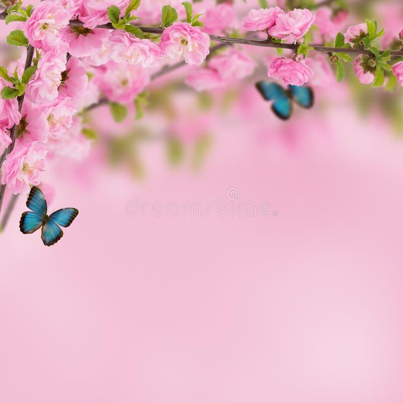 Prentbriefkaar met verse de lente bloeiende boom en lege plaats voor y royalty-vrije stock foto