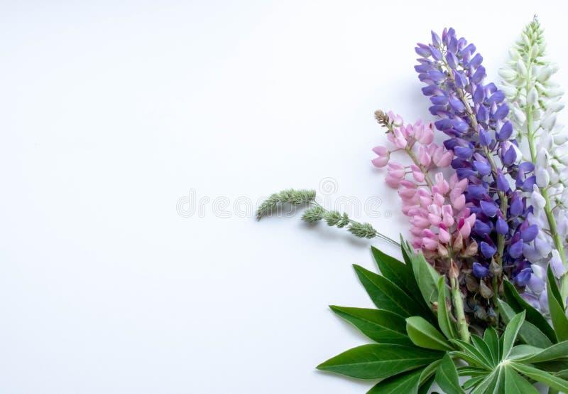 Prentbriefkaarboeket van multicolored lupines op een witte achtergrond stock foto