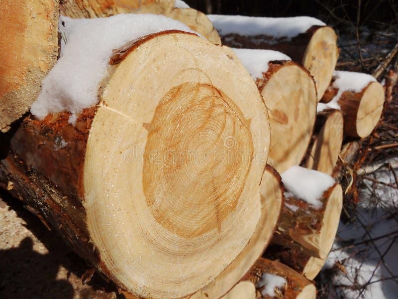 Preparação de madeira foto de stock royalty free