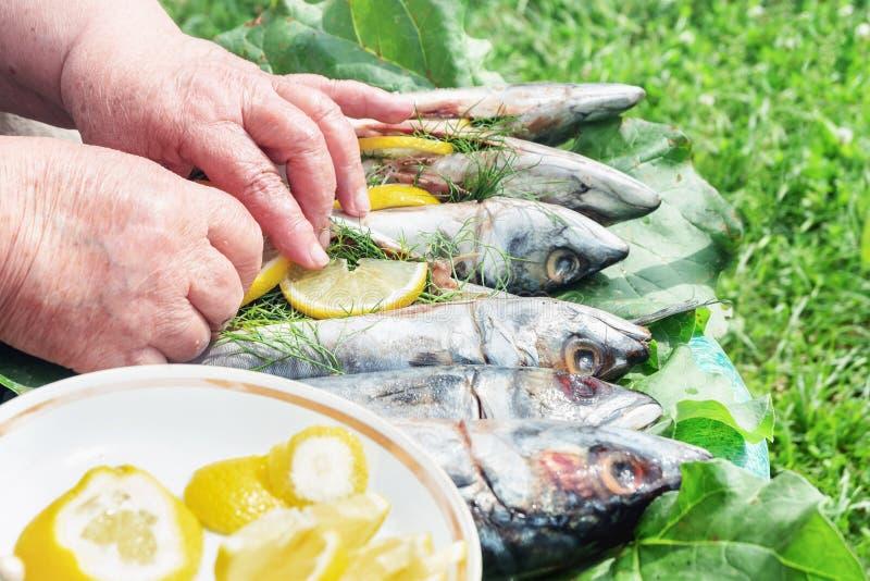 Preparação de peixes frescos crus para fumar Cozimento ao ar livre foto de stock
