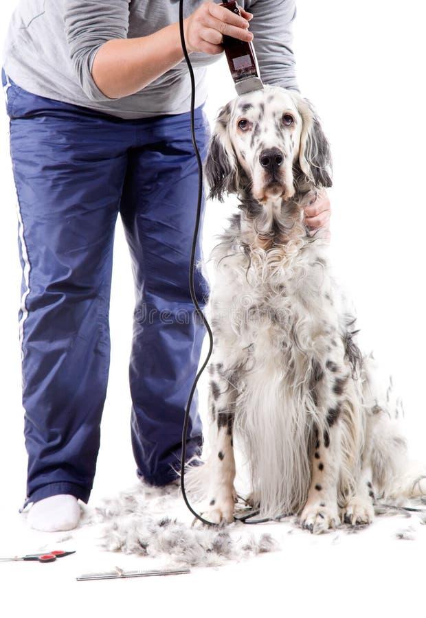 Preparação do cão imagem de stock