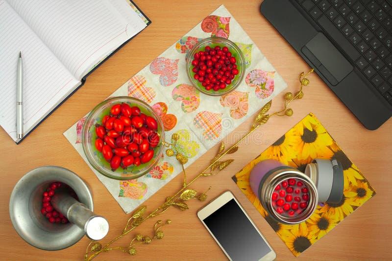 Preparação do cão das tinturas cor-de-rosa e do espinho, telefone, portátil, planta dourada imagem de stock royalty free