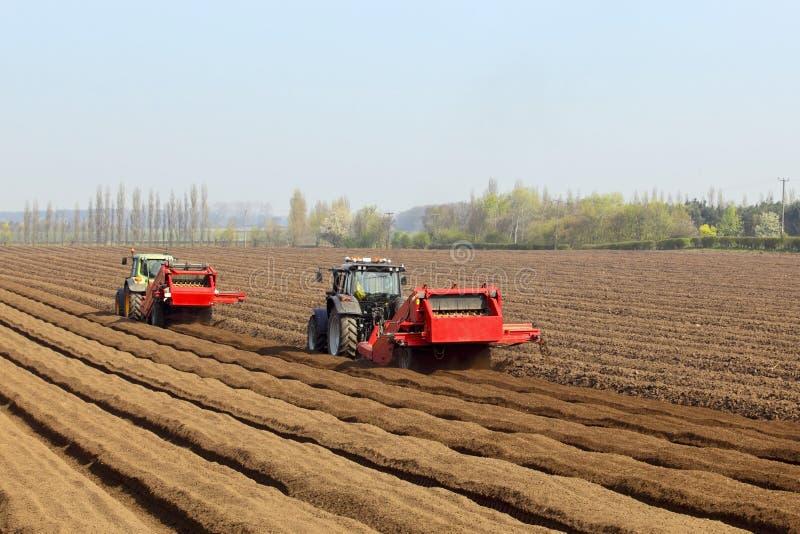 Preparação semear cenouras imagem de stock