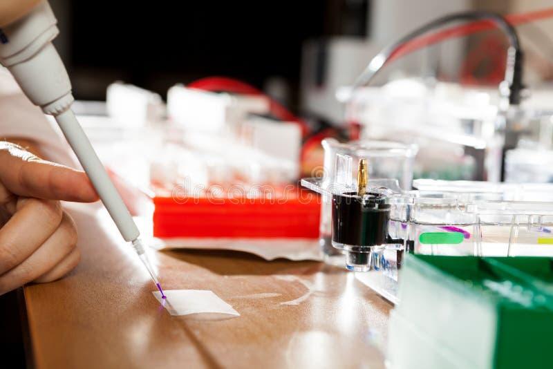 Preparación de la muestra para la electroforesis de la DNA fotos de archivo libres de regalías