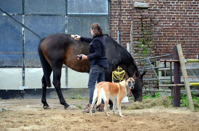 Preparación de su caballo foto de archivo libre de regalías