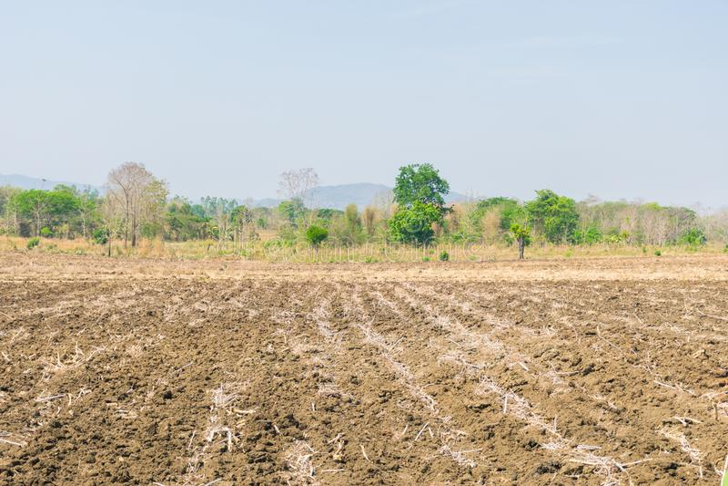 Preparaci?n del suelo cultivado para la agricultura imagen de archivo