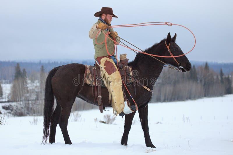 Preparando ao laço um cavalo foto de stock