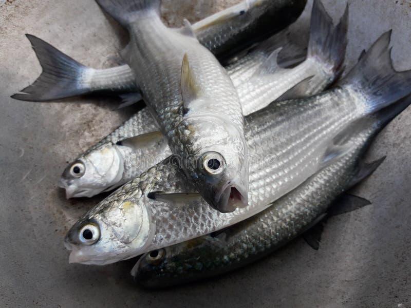 Preparando o alimento de peixes imagens de stock royalty free