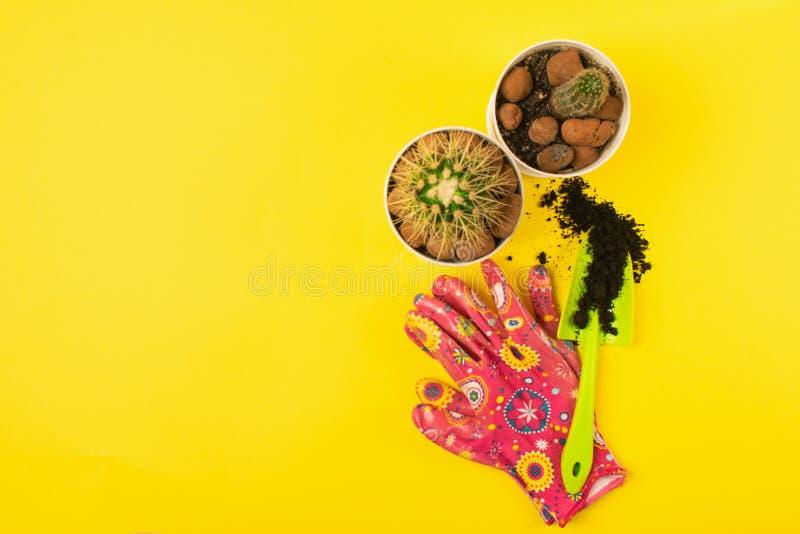 Preparando per le piante di trapianto della molla in vasi Un vaso, pala, cactus di sigillo su un fondo giallo luminoso fotografie stock