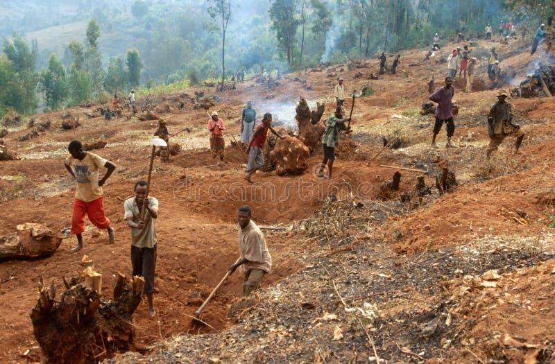 Preparando a terra para a agricultura, Uganda imagens de stock