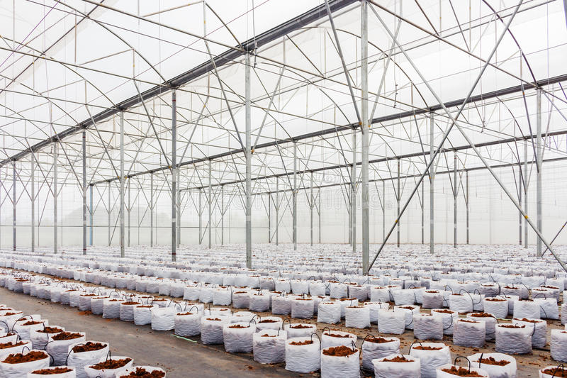 Preparation coco peat in greenhouse stock images