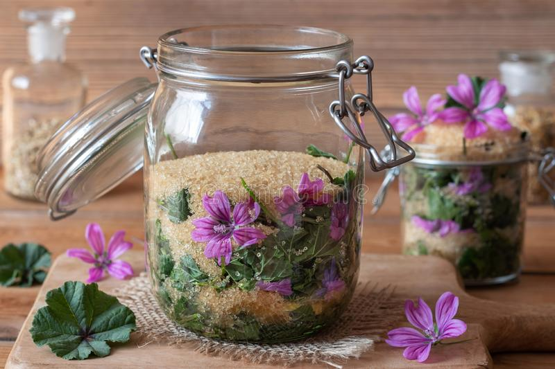 Preparation of common mallow syrup against cough. A jar filled with wild common mallow flowers and leaves and cane sugar, to prepare herbal syrup against cough royalty free stock photo