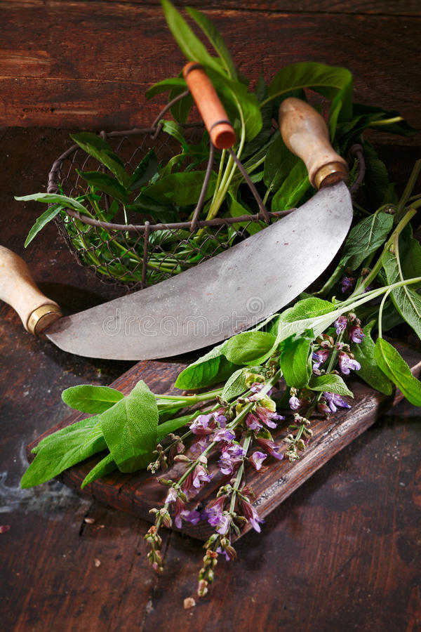 Download Preparation Of Sage For Cooking Stock Image - Image: 25733179