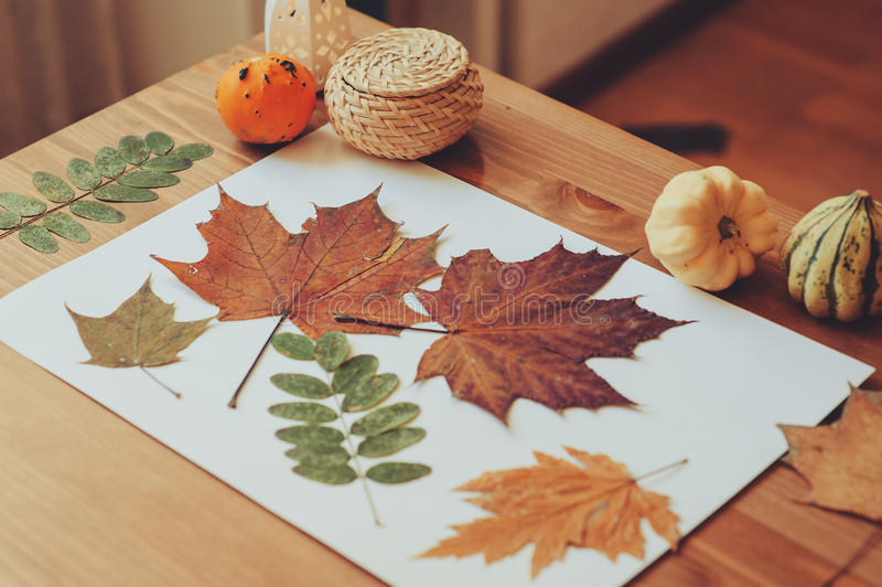 Preparations for autumn craft with kids. Herbarium from dried leaves. Learning children at home, fall nature collage stock photo
