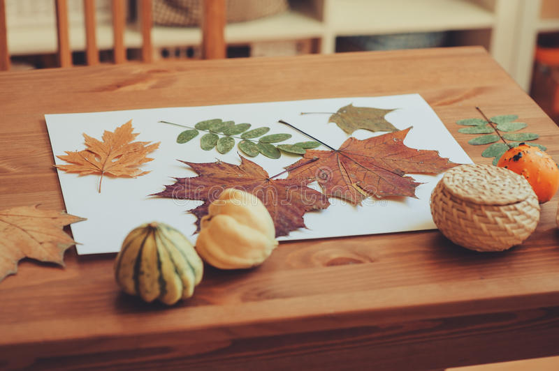 Preparations for autumn craft with kids. Herbarium from dried leaves. Learning children at home, fall nature collage royalty free stock photography