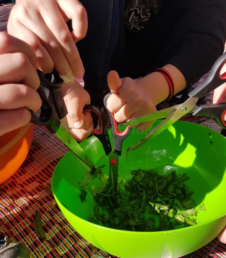 Preparations for field cooking - kids hands cutting edible plants in a bowel. N stock photography