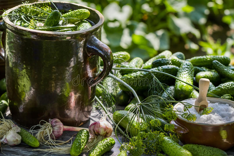 Preparations for pickling cucumbers in the village royalty free stock photo