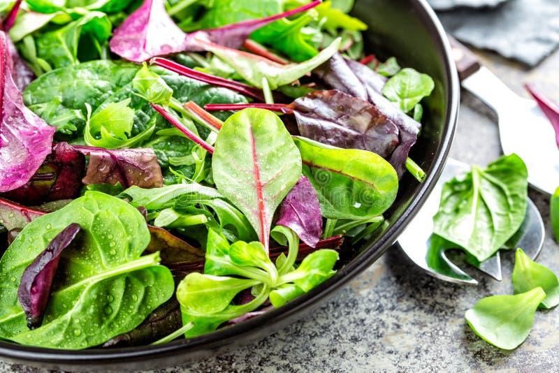 Preparato fresco dell'insalata degli spinaci del bambino, delle foglie della rucola, del basilico, della bietola e della dolcetta immagine stock