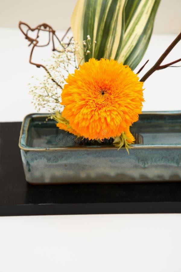 preparaty kwiat obraz royalty free