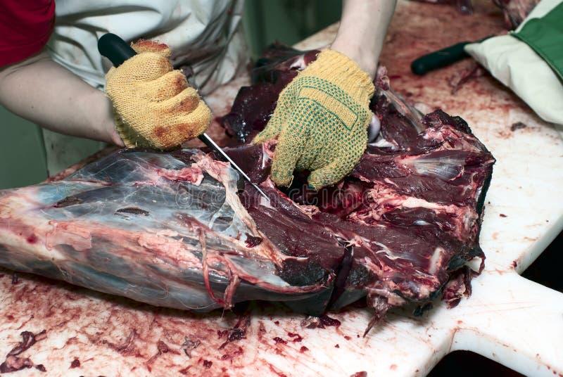 Preparazione della carcassa dei cervi immagini stock