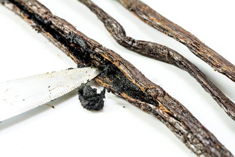 Preparazione della vaniglia, punta del coltello che raschia i semi da una vaniglia p fotografia stock libera da diritti