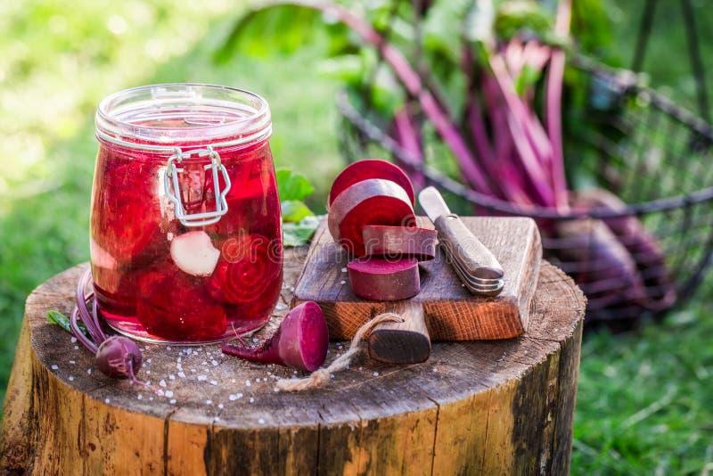 Preparazione per le barbabietole marinate di estate immagine stock libera da diritti