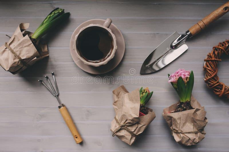 Preparazioni del giardino della primavera Fiori del giacinto e strumenti d'annata sulla tavola, vista superiore fotografie stock libere da diritti