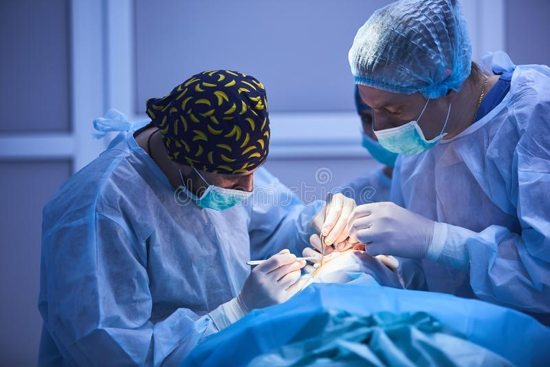 Preparazioni della chirurgia Gruppo chirurgico che prepara il loro paziente per la chirurgia che regola maschera di ossigeno sul  immagini stock