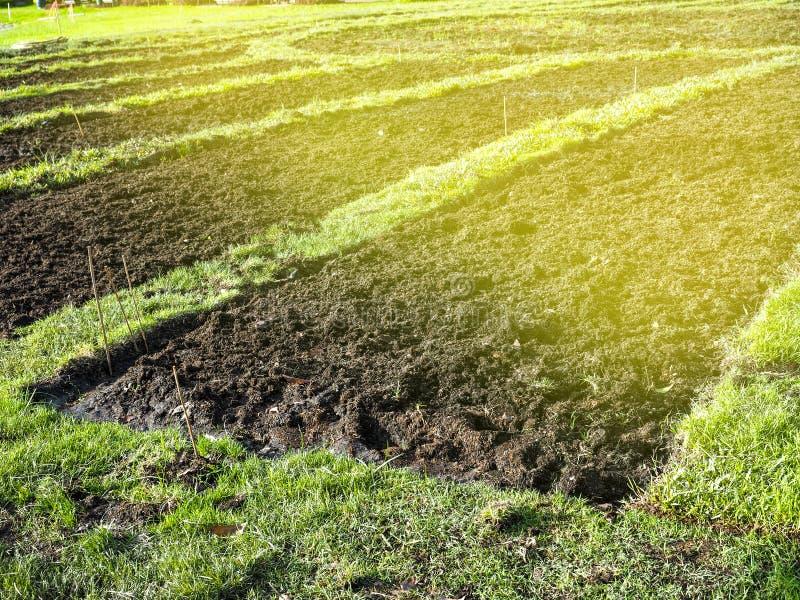 Prepare a plantação A conversão das colheitas vegetais dos fazendeiros imagens de stock