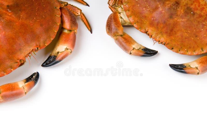 Download Prepared crab stock photo. Image of animal, freshness - 7859200