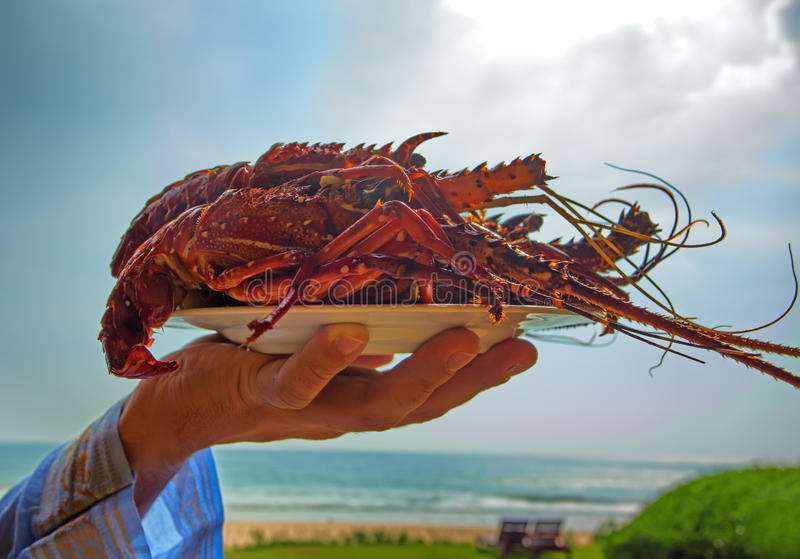 Prepared Lobsters. Dish with prepared juicy lobsters stock photography