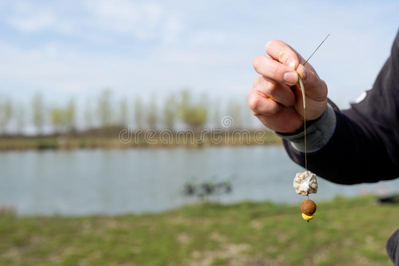 Preparing bait for fishing on lake. Sport fishing stock photography