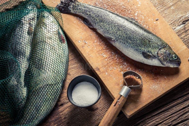 Preparing fish caught in freshwater royalty free stock image