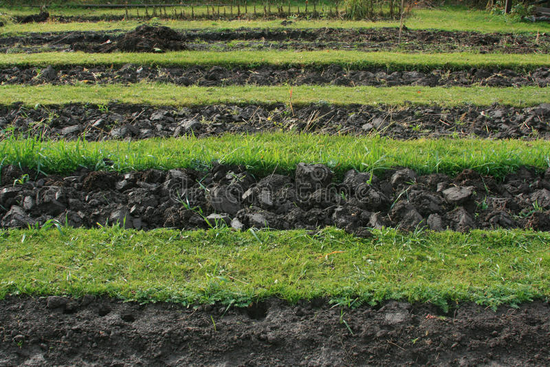 Download Preparing garden bed stock photo. Image of manure, cumulose - 21863170