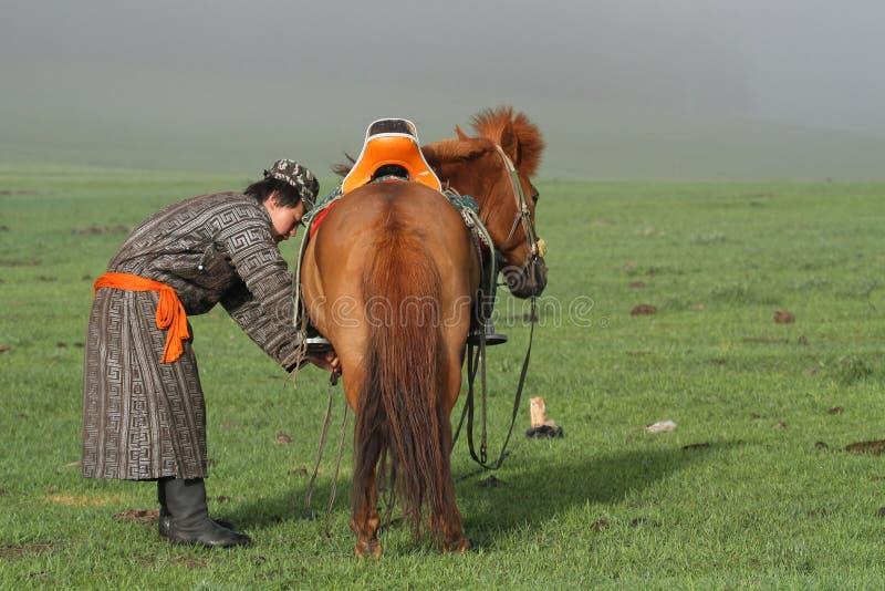 Preparing his horse at dawn stock image