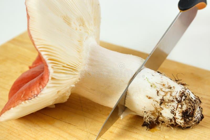 Preparing mushroom. Preparing big edible russola mushroom on wooden board royalty free stock images