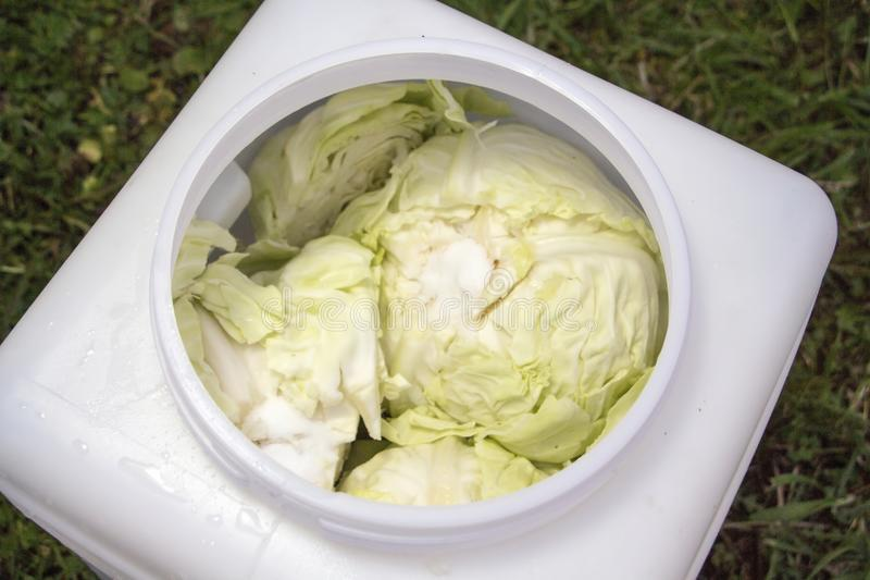 Preparing sauerkraut food stock photos
