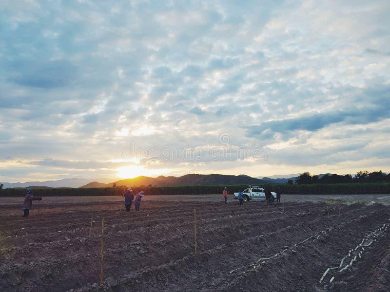 Prepearing甘蔗领域 库存照片