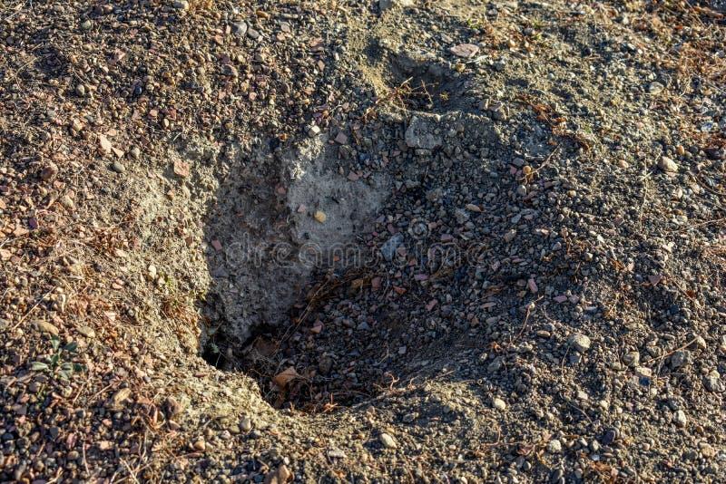 Preryjnego psa dziura kopiąca głęboko zdjęcia stock