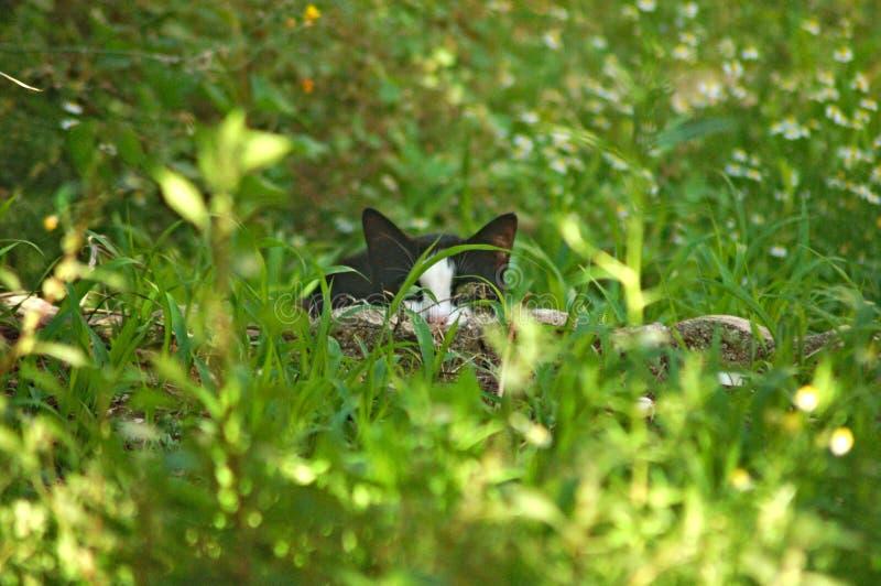 Presa blanco y negro de la caza del gato en un jardín italiano imagen de archivo libre de regalías